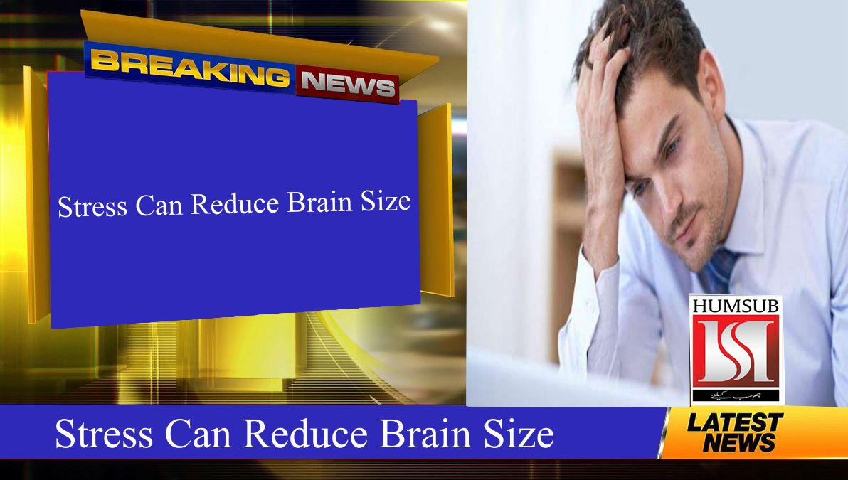Stress Can Reduce Brain Size