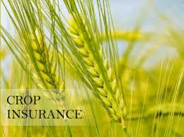 Crop Insurance Should Be An Integral Part Of Pakistan's Agricultural Setup