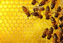 First Ever World Bee Day Launched By UN
