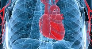 Successful Printing Of 3D Human Heart Tissue-A Major Break Through