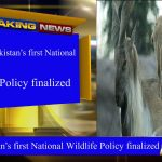 Draft of Pakistan's first National Wildlife Policy finalized