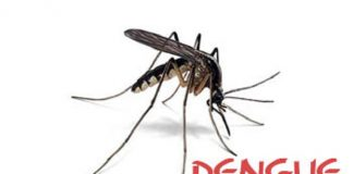 Increasing Dengue Patients Requires Preventive Measure